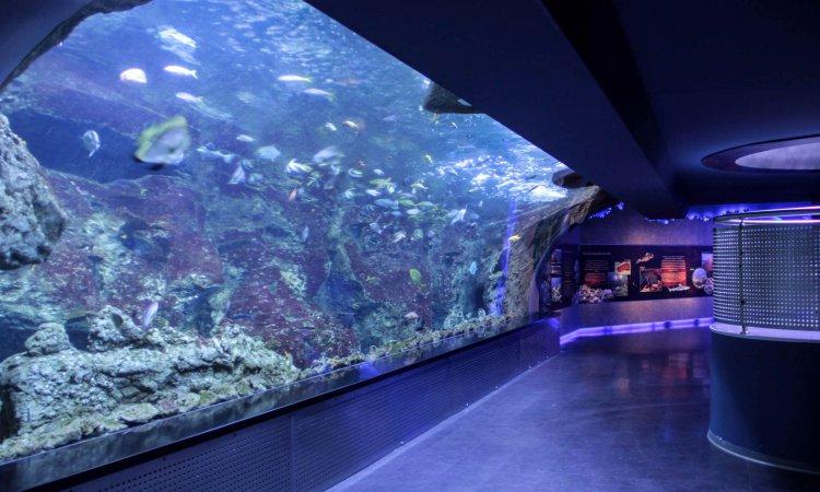 İstanbul Aquarium16